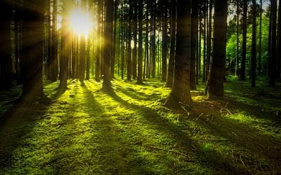Green Is Good for You: How Contact with Nature Can Improve Your Mental Health